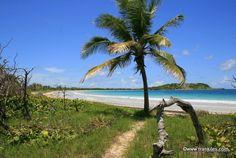 Martinique photo Plage de l'Anse Trabaud à sainte-Anne