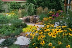 Orange Coneflower (Rudbeckia fulgida).  Native along a diagonal line from Texas to Wisconsin, then east.  [Field Outdoor Spaces]