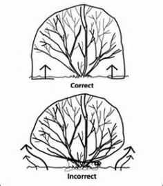 Warm Plant Cover Tree Shrub Protecting Zipper Bag Frost Protection Garden Winter