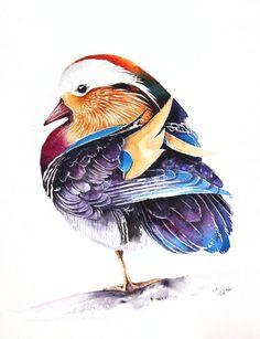 ARTFINDER:  Mandarin Duck (Aix galericulata) bir... by Karolina Kijak -  Original watercolors of Mandarin Duck Paper 300g  100% cotton, high quality pigments size 23x31cm  Follow me on facebook: https://www.facebook.com/kijak...