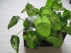 水に挿しておくだけ 究極の「放置系」観葉植物