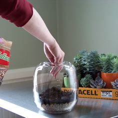 add cactus and succulent soil mix