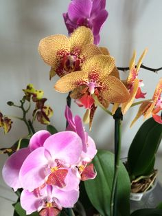 Orquídea (com zoom)