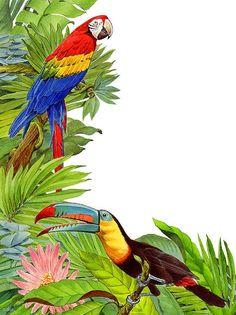 Tropical Tete A Tete Canvas Print / Canvas Art by Shawn Shea Motif Tropical, Tropical Art, Tropical Birds, Tropical Flowers, Fine Art Prints, Framed Prints, Canvas Art, Canvas Prints, Bird Art