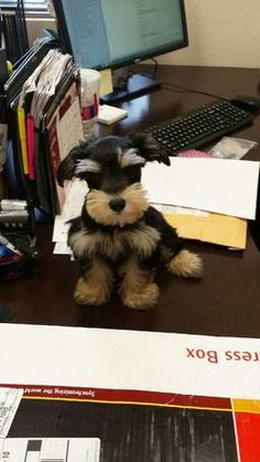 I wish someone would drop this little one off on my desk.  Steve wouldn't be happy though