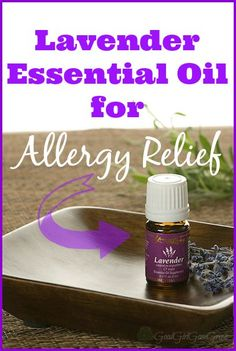 Lavender Essential Oil for Allergy Relief GoodGirlGoneGreen.com #essentialoils #lavender #allergyrelief