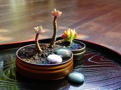 Altoids Tin Garden by Marque Cornblatt, gomistyle #Garden #Altoids_Tin_Garden #Marque_Cornblatt