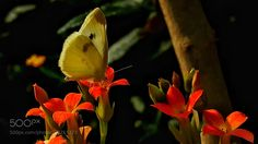 Flowers and butterflies. by love365lsc
