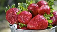 Strawberries are possibly the most irresistible and beautiful fruits. Everything about the strawberry be it color, texture or flavor is appealing which. Boku Superfood, Healthy Fruits, Healthy Recipes, Diabetic Recipes, Healthy Eating, Low Potassium Recipes, Strawberry Health Benefits, Food For Glowing Skin, Strawberry Plants