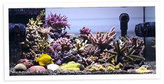 Kayleen's 30 Gallon Shallow Nano Reef Aquarium  Nano-Reef.com  All things saltwater!