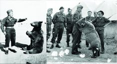 Wojtek The Soldier Bear