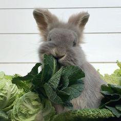 Baby Bunnies, Cute Bunny, Easter Bunny, Cutest Bunnies, Farm Animals, Animals And Pets, Cute Animals, Hamsters, Love Pet