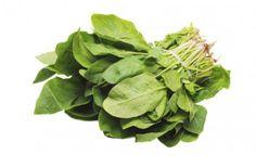 Rumex acetosa - Der Sauerampfer wächst auf feuchten Wiesen. Gesammelt wird das ganze Kraut von März bis Oktober. Geschmack: fein-säuerlich, zitronenartig. Enthält Oxalsäure, also nicht zu viel davon!