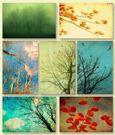 Tree photography autumn decor turquoise harvest gold pale green crimson clouds green accent - Set of 7 4x6 prints $18.75 (c) bomobob