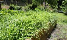 tips on planting a fall 'cover crop' to improve and protect soil in beds over winter, turn it back into beds before planting again.