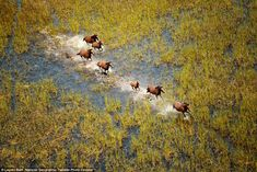 Lauren Bath, from Australia's Gold Coast, photographed wild horses during a helicopter ride over Kimberly in Western Australia