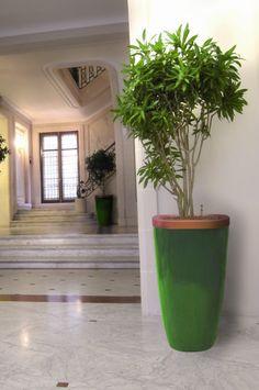 Quadik Plus planter in green and orange, planted with Pleomele Song of Jamaica