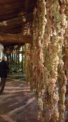 Best winery tour in Tuscany - Review of Castello di Volpaia, Radda in Chianti, Italy - TripAdvisor