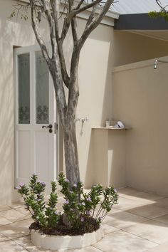 Outside Shower in one of the 8 luxury suites at River Bend Lodge. Luxury Suites, South Africa, The Outsiders, National Parks, Elephant, River, Shower, Plants, Rain Shower Heads