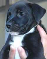 Costa Rica Dog Shelter - Donate $1 and you could win a trip for 2 to Costa Rica. Less than a trip to Starbucks!