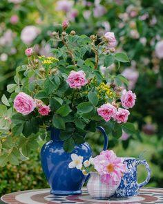Mein Tipp für Gefäße im unkomplizierten, natürlichen Stil: bunt gemischte Krüge und Kännchen. Ikebana, Amaryllis, Bunt, Vase, Plants, Lilac Bushes, Tulips, Decorating Ideas, Creative