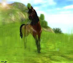 star stable how to find loretta