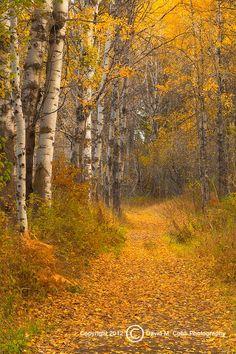 Autumn (Washington) by David Cobb