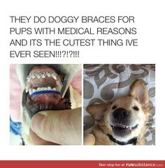 Best Funny Dogs With Babies Pets 28 Ideas Funny Animal Memes, Dog Memes, Funny Animal Pictures, Funny Dogs, Funny Images, Cute Little Animals, Cute Funny Animals, Funny Cute, Hilarious