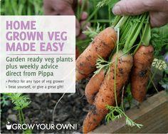 Home grown veg made easy