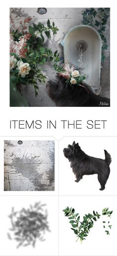 """""""Stop And Smell The Flowers"""" by thewondersoffashion ❤ liked on Polyvore featuring art, floral and dog"""