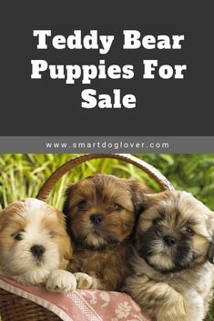 19 Best Puppies For Sale Images Puppies For Sale Puppies
