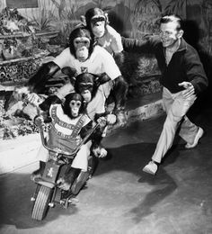 Mike Kostial served as the Zoo's chimpanzee director for 37 years until his death in 1976. Courtesy of Saint Louis Zoo.
