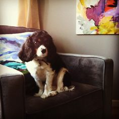 desire to inspire - desiretoinspire.net - Monday's pets on furniture