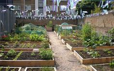 Styles House allotment was created by members of the local community on a piece of derelict land owned by Transport for London (TFL) above S...