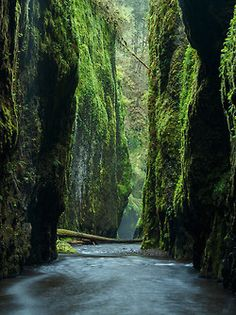 travelingcolors: Oneonta Gorge | Oregon (by Alan Howe)
