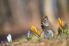 Animal Squirrel  Wallpaper