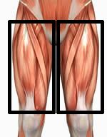 The Best Quad Exercises for Building Strong and Powerful Legs best quad exercises In no particular order… Barbell Squats Front Squats Barbell Hack Squats Bulgarian Squats Hip Belt Squats Zercher Squats Lunges
