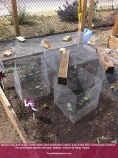 Metal vegetable protection cages to keep critters out of your raised garden bed. As presented by Shirley Bovshow, on Home & Family Show!