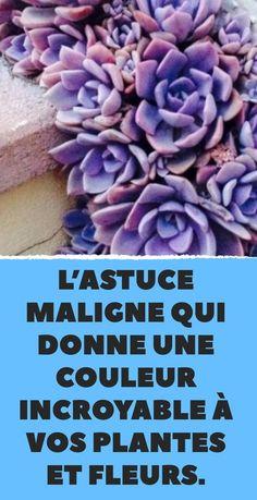 L astuce maligne qui donne une couleur incroyable à vos plantes et fleurs. 96553b32df1