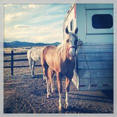 Another look at #NewMexico #horses from black_steele! #NMTrueHeritage