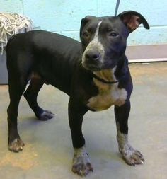 Ludo - URGENT - Dekalb County Animal Shelter in Decatur, Georgia - ADOPT OR…