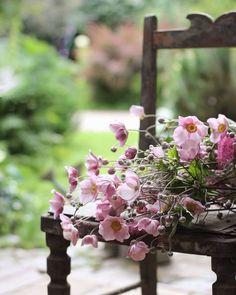 Grandmas Garden, Dear Lillie, Forever Flowers, Joy Of Living, Autumn Morning, Country Women, Dream Garden, Outdoor Gardens, Bloom