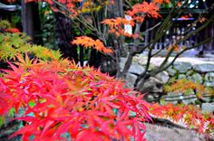fall1 by MeAmore5, via Flickr