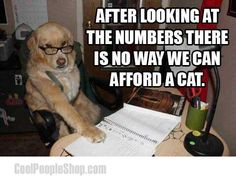 funny captions, animal memes, animal pictures with captions Funny Shit, Funny Dog Memes, Funny Animal Memes, Cute Funny Animals, Funny Cute, Funny Dogs, Funny Dog Sayings, Stupid Jokes, Hilarious Jokes