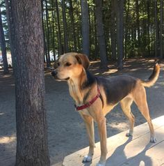 Hanging out at Dover Dog Park - Long Hill Memorial Park - Dover, NH - Angus Off-Leash #dogs #puppies #cutedogs #bigdogs #dogparks #angusoffleash #dover #newhampshire
