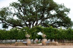 Weddings - Agate Ridge Vineyards