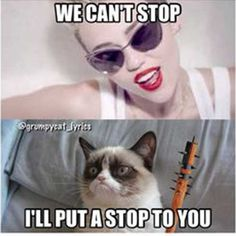 Grumpy Cat is kind of getting out of hand with her behavior! (Grumpy Cat is a girl if you didn't know. Grumpy Cat Quotes, Funny Grumpy Cat Memes, Cat Jokes, Funny Animal Memes, Funny Cats, Funny Memes, Funny Animals, Funny Quotes, Funniest Quotes