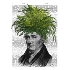 Picture showing FabFunky - Fern Head, Plant Head, Antiquarian Book Print, 20.3 x 25.4cm