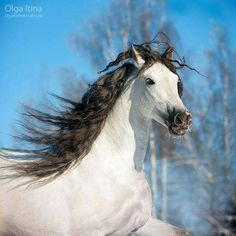 Via I cavalli? la mia passione. Most Beautiful Animals, Beautiful Creatures, Animals And Pets, Cute Animals, Free Horses, Horse Posters, Year Of The Horse, All About Horses, Majestic Horse