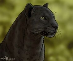 How to Draw Panthers, Black Panthers, Step by Step, Rainforest animals, Animals, FREE Online Drawing Tutorial, Added by makangeni, January 10, 2013, 4:41:54 pm